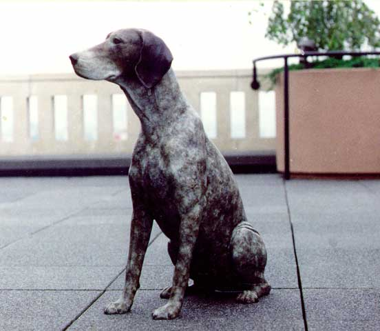 Germanshorthaired Pointer